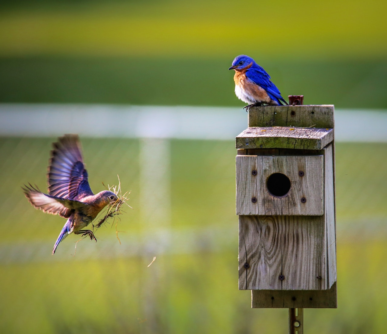 Tiltræk fugle